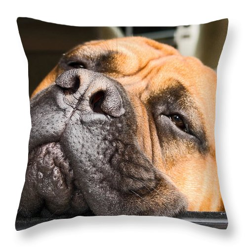 Mastif Dog Throw Pillow featuring the photograph Going To Sleep by Sally Weigand