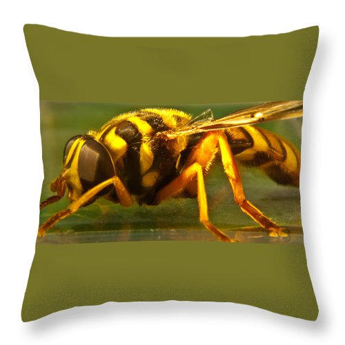 Syrphid Throw Pillow featuring the photograph Gold Syrphid Fly by Douglas Barnett