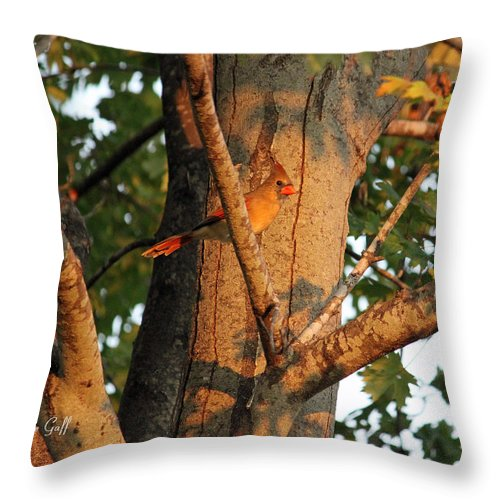 Cardinal Throw Pillow featuring the photograph Golden Afternoon Glow by Suzanne Gaff