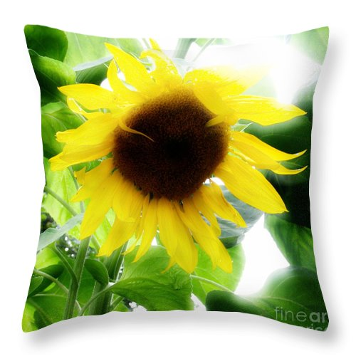 Sunflower Throw Pillow featuring the photograph Golden Beauty by Idaho Scenic Images Linda Lantzy