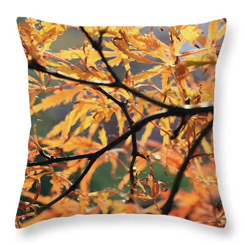 Autumn Throw Pillow featuring the photograph Golden Branch by Mary Haber