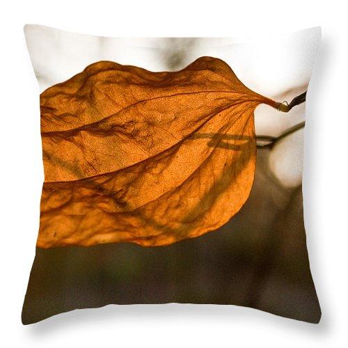 Golden Throw Pillow featuring the photograph Golden Briar Leaf by Douglas Barnett