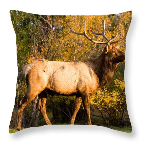 Autumn Throw Pillow featuring the photograph Golden Bull Elk Portrait by James BO Insogna