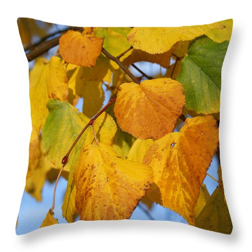 Autumn Throw Pillow featuring the photograph Golden by Carol Lynch