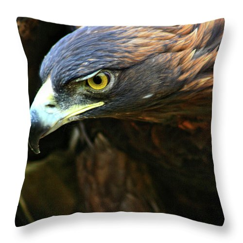Golden Eagle Throw Pillow featuring the photograph Golden Eye by Scott Mahon