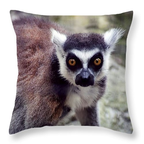 Animals Throw Pillow featuring the photograph Golden Eyes by Jan Amiss Photography
