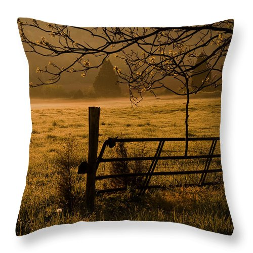 Cave Spring Throw Pillow featuring the photograph Golden Glow by Patricia Montgomery