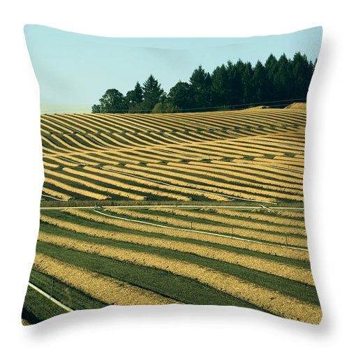 Plow Throw Pillow featuring the photograph Golden Green by Sara Stevenson