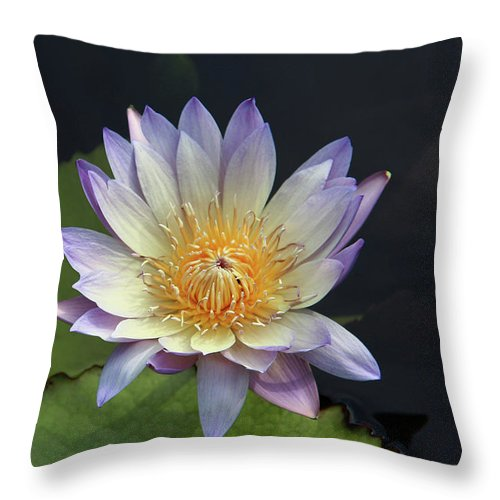 Water Lilies Throw Pillow featuring the photograph Golden Hue by Yvonne Wright