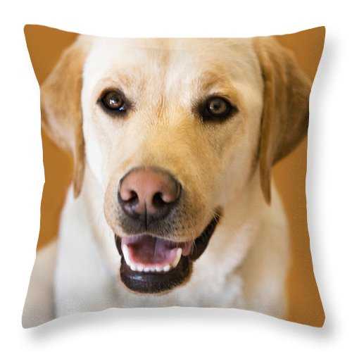 Lab Throw Pillow featuring the photograph Golden Lab by Marilyn Hunt