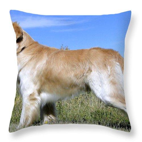 Al Bourassa Throw Pillow featuring the photograph Golden Labrador - Cheemo by Al Bourassa