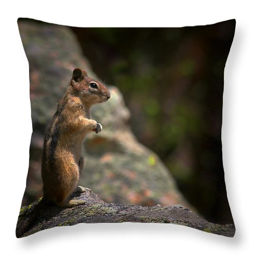 Nature Throw Pillow featuring the photograph Golden Mantled Ground Squirrel Rocky Mountains Colorado by Christine Till