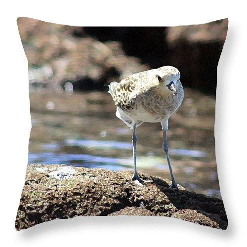 Plover Throw Pillow featuring the photograph Golden Plover by Mary Haber