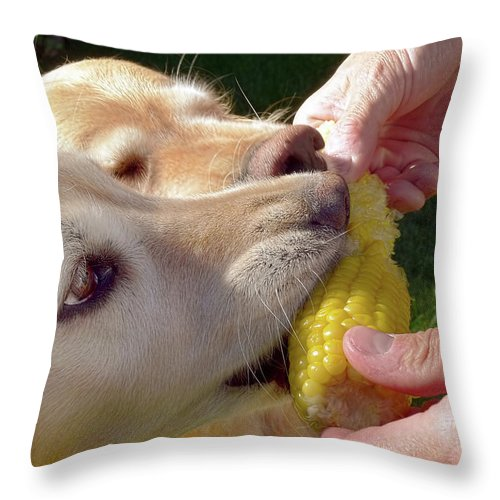 Golden Retriever Throw Pillow featuring the photograph Golden Retriever Dogs Corn Dog Summer by Jennie Marie Schell