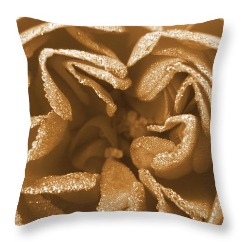 Rose Throw Pillow featuring the photograph Golden Rose by Amy Fose