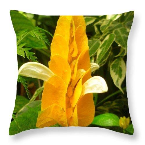 Tropical Throw Pillow featuring the photograph Amazing Golden Shrimp Plant by Lingfai Leung