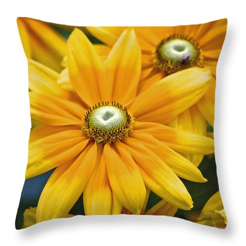 Flowers Throw Pillow featuring the photograph Golden Sunshine by Donna Bentley