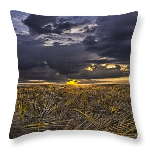 Cereal Throw Pillow featuring the photograph Golden Toast by Joachim G Pinkawa
