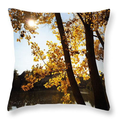 Tree Throw Pillow featuring the photograph Golden trees in autumn Sindelfingen Germany by Matthias Hauser