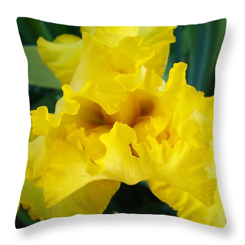 �irises Artwork� Throw Pillow featuring the photograph Golden Yellow Iris Flower Garden Irises Flora Art Prints Baslee Troutman by Baslee Troutman