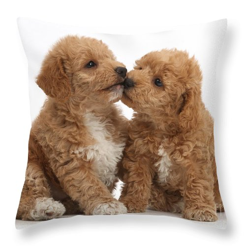 Goldendoodle Puppies Kissing Throw Pillow For Sale By Mark Taylor