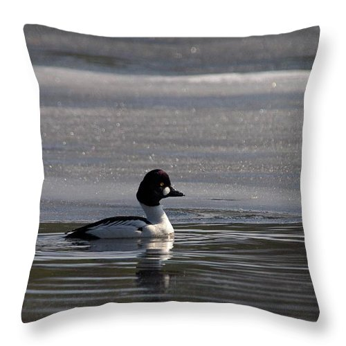 Lehtokukka Throw Pillow featuring the photograph Goldeneye 4 by Jouko Lehto