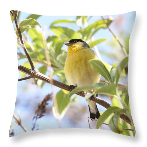 Bird Throw Pillow featuring the photograph Goldfinch In Spring Tree by Carol Groenen