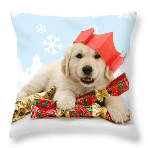 Golden Retriever Throw Pillow featuring the photograph Goldie Crackers by Warren Photographic