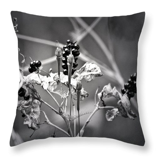 Flower Throw Pillow featuring the photograph Gone To Seed Berries And Vines by Teresa Mucha