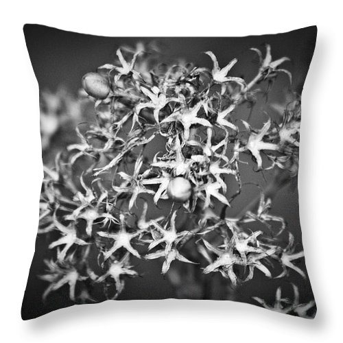 Flower Throw Pillow featuring the photograph Gone To Seed Phlox by Teresa Mucha