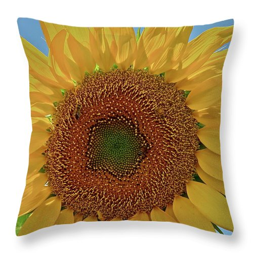 Flower Throw Pillow featuring the photograph Good Morning by Diana Hatcher