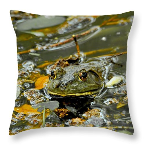 Frogs Throw Pillow featuring the photograph Good Morning by Donna Shahan
