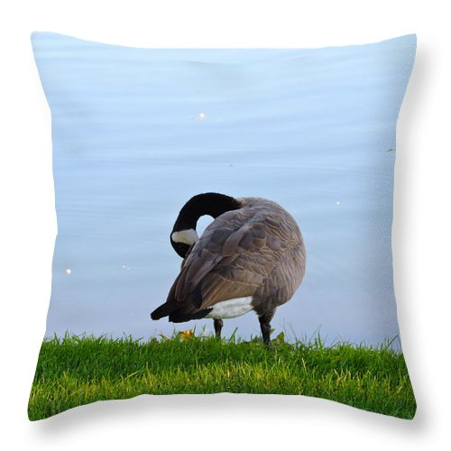Goose Throw Pillow featuring the photograph Goose #1 Pose by Roberts Photography