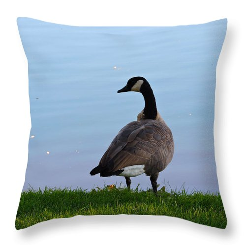 Goose Throw Pillow featuring the photograph Goose #2 Pose by Roberts Photography