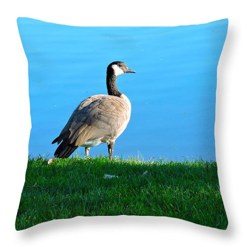 Goose Throw Pillow featuring the photograph Goose #3 Pose by Roberts Photography