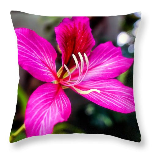 Flower Throw Pillow featuring the photograph Gorgeous Bauhina by Sue Melvin
