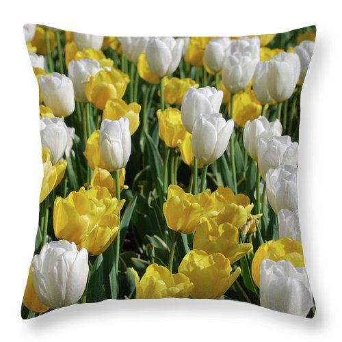 Tulip Throw Pillow featuring the photograph Gorgeous Blooming Field Of White And Yellow Tulips by DejaVu Designs