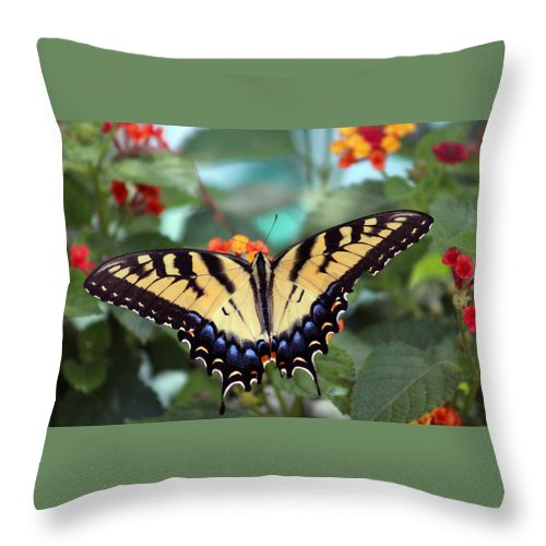 Butterfly Throw Pillow featuring the photograph Gorgeous Butterfly by Bill And Deb Hayes