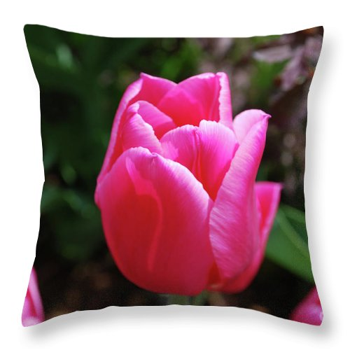 Tulip Throw Pillow featuring the photograph Gorgeous Dark Pink Tulip Blooming In A Garden by DejaVu Designs