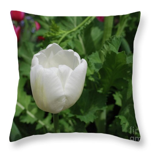 Tulip Throw Pillow featuring the photograph Gorgeous Flowering White Tulip In A Spring Garden by DejaVu Designs