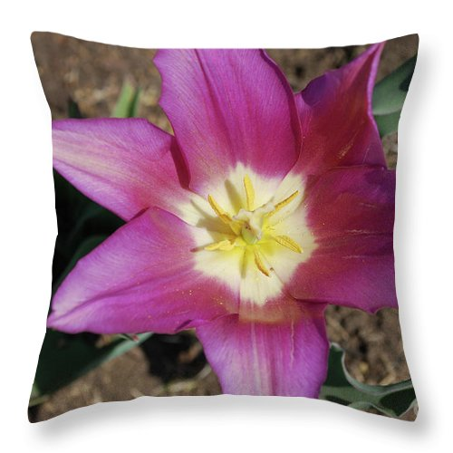 Tulip Throw Pillow featuring the photograph Gorgeous Light Purple Tulip With Yellow Stamen by DejaVu Designs