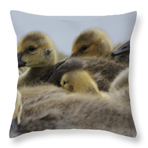 Geese Throw Pillow featuring the photograph Gosling Gaggle by Lauri Novak