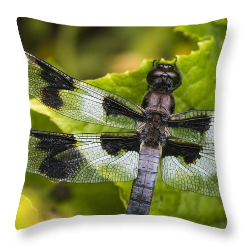 Aquatic Insects Throw Pillow featuring the photograph Gossamer Wings by Robert Potts