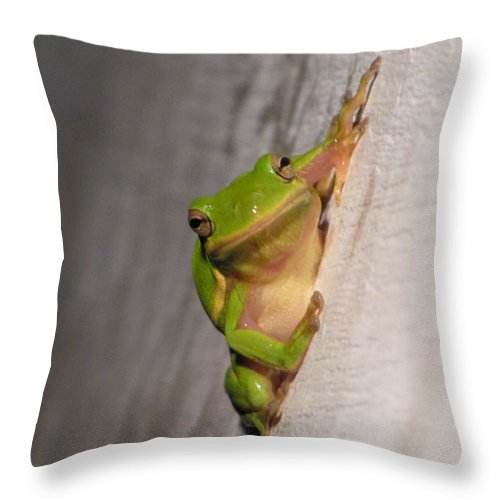 Tree Frog Throw Pillow featuring the photograph Got Flies by Jennie Richards