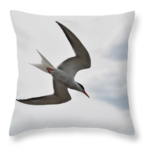 Common Tern Throw Pillow featuring the photograph Gracious Flight by Asbed Iskedjian