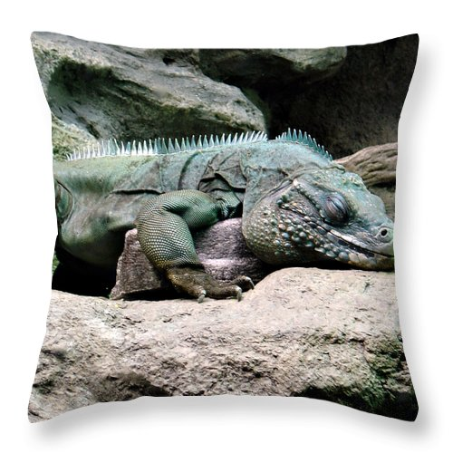 Lizard Throw Pillow featuring the photograph Grand Cayman Blue Iguana by Angelina Tamez