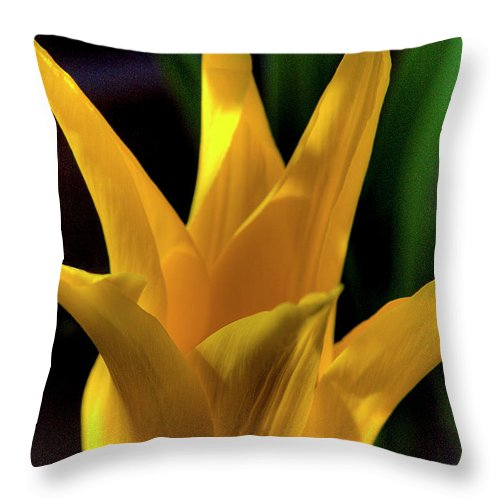 Yellow Throw Pillow featuring the photograph Grand Opening by David Patterson