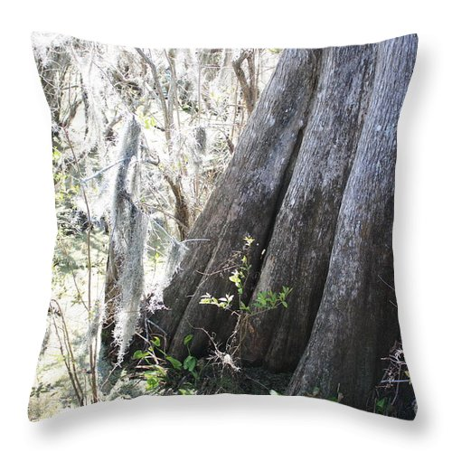 Old Cypress Throw Pillow featuring the photograph Grandfather Cypress by Carol Groenen