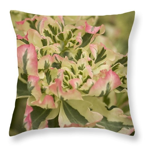 Pink Throw Pillow featuring the photograph Grandma's Garden by Cheryl Day