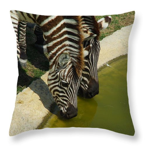 Zebra Throw Pillow featuring the photograph Grants Zebras - Thirst Quencher by Robyn Stacey